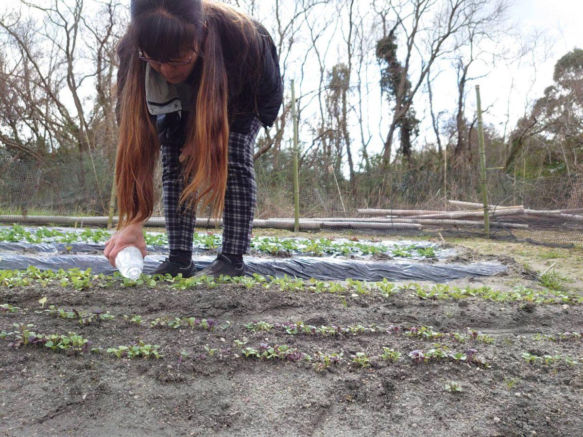 Honjima Stand 農園 #3 春野菜がすくすくと成長中